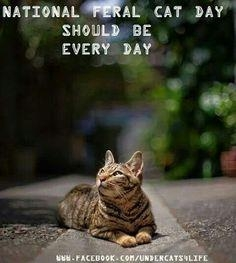 Image result for national feral day